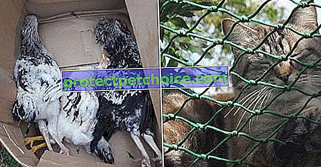 Saint-Aubin (62): Un perro liberado en el recinto del refugio SPA, provoca la muerte de varios animales