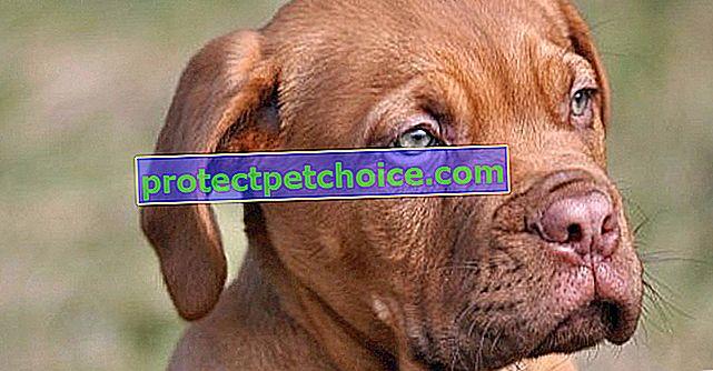 Las 10 mejores razas de perros para niños
