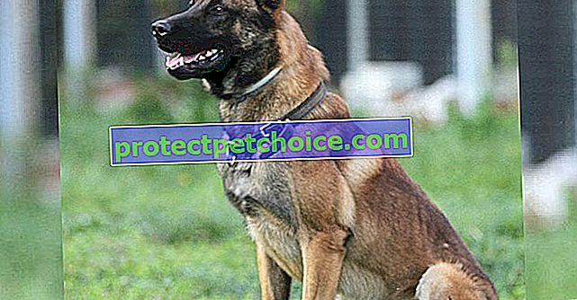 Кучето на полицията в Тулуза слага край на нападението с нож и палка