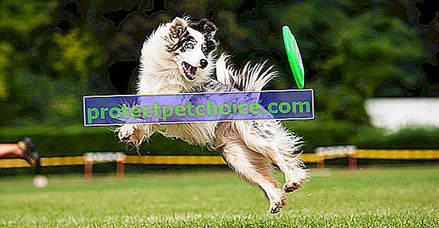 Igranje s psom na prostem