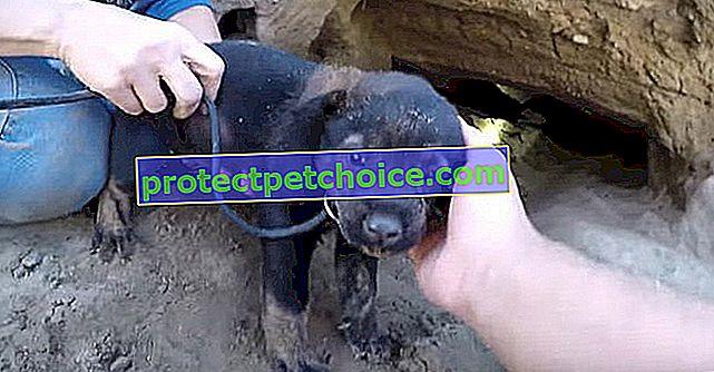 El peligroso rescate de 9 cachorros atrapados en un agujero cerca de las vías del tren