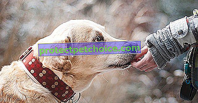 Увеличение на кражбите на кучета, тревожно увеличение!