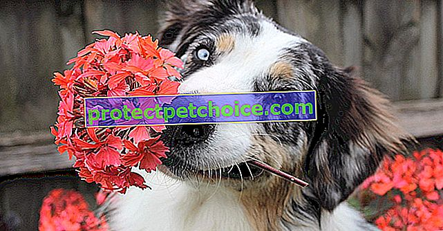 7 consejos para proteger las plantas y jardines de tu perro este verano