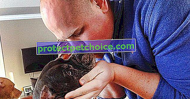 На честь своєї мертвої собаки пара вже врятувала понад 300 собак!