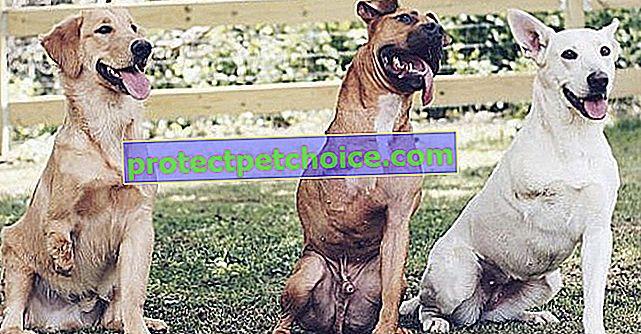 Тази двойка приема само кучета с 3 крака