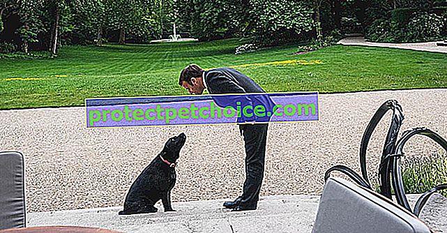 Emmanuel Macron podziela wartości SPA i jest publikowany w sieciach społecznościowych ze swoim psem Némo