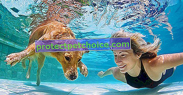 Naucz swojego psa pływać