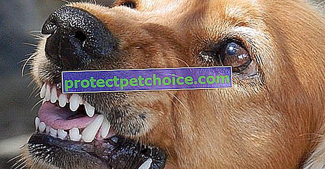 5 příznaků, že váš adoptovaný pes byl v minulosti zneužíván