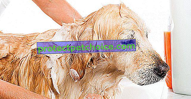 Izbira pravega šampona za svojega psa