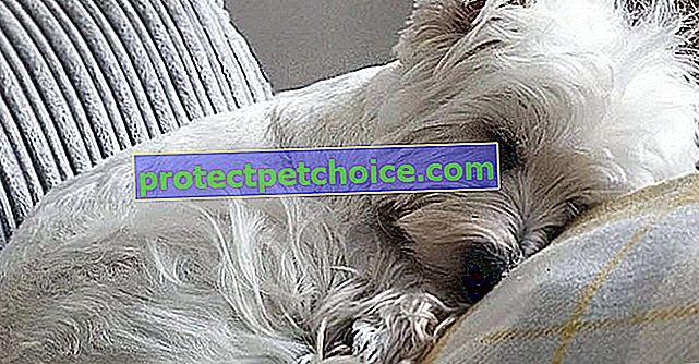 12 pasa terijera zbog kojih ćete poželjeti udomiti jednog