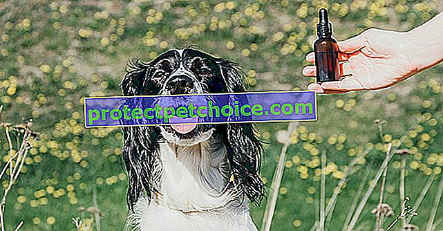 Kako koristiti esencijalna ulja na svom psu?