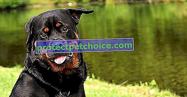 Bivša članica SPA, osnovala je dom umirovljenika za starije, bolesne i pse s invaliditetom