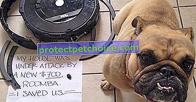 14 fotos de perros que han hecho algo estúpido