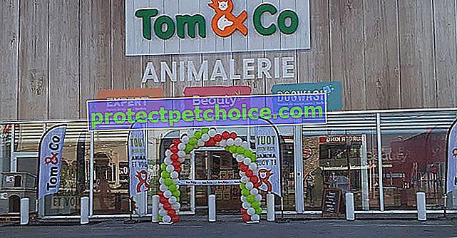 La tienda Tom & Co en Nantes celebra su primer aniversario y se centra en los servicios de bienestar dedicados a su animal