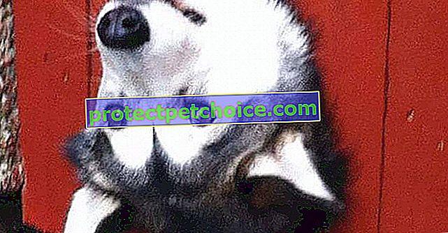 13 pasa koji vas pozdravljaju na svoj način
