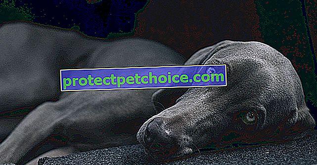 Światowy Dzień Psa: data oddania hołdu więzi, która łączyła ludzi i psy od tysiącleci!