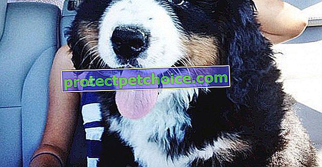 17 снимки на малки кученца, които ще пораснат в големи кучета