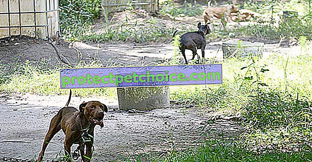 135 години затвор за изоставяне на 27 осакатени бойни кучета в задния двор