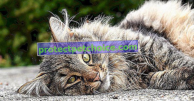 Изгубен в къмпинг, котка намира семейството си 12 години по-късно!
