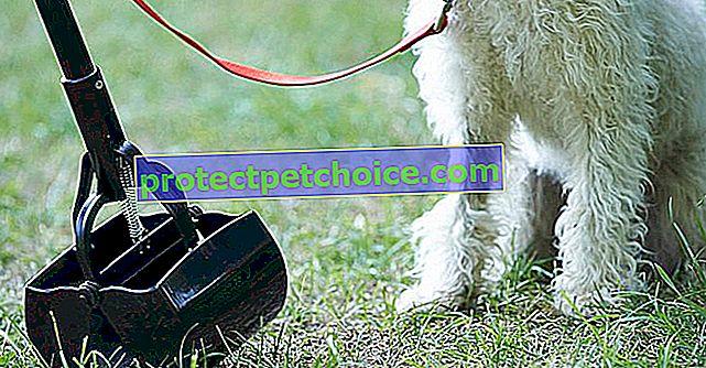 6 съвета за предотвратяване на полепването на кучето на вашето куче по косата му