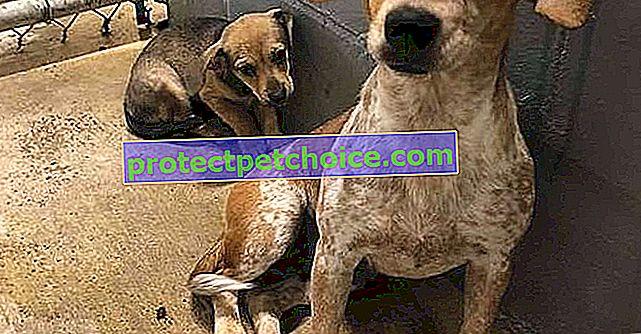 Куче и нейното кученце изоставени в приют за животни