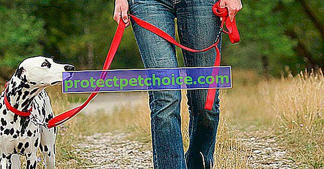 Управление на страха от каишката при кучета