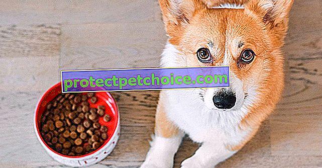 Revoluce ve vašem supermarketu v části granule vašeho psa nebo kočky: prémiové recepty za nízké ceny