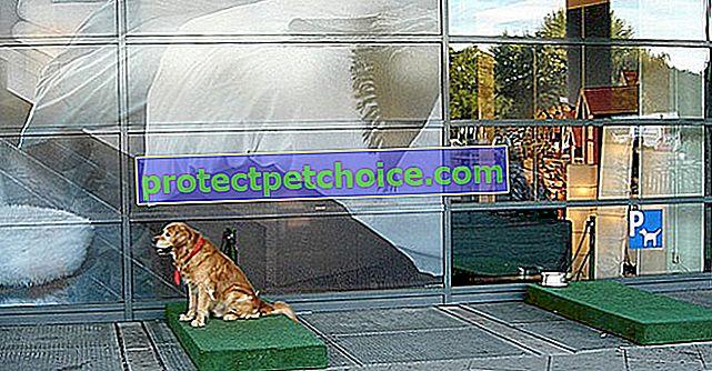 ¡Ikea establece estacionamiento para perros para evitar que los perros esperen en el horno de los autos!