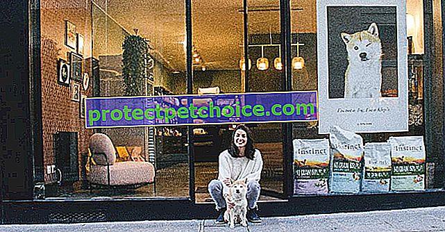 Klep's odpre svoj prvi butik, posvečen umetnosti življenja psov