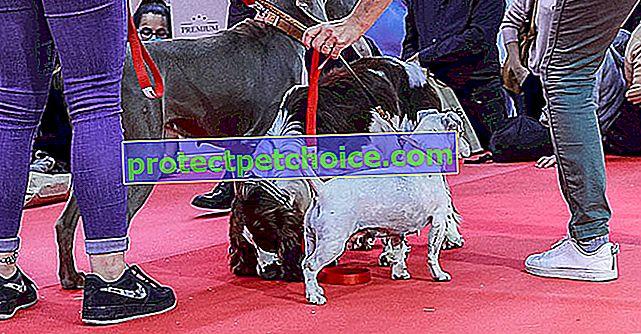 Парижкото изложение за животни се готви да изживее своето пето издание със страхотна новост: приемането на шоуто
