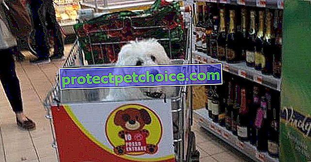 ¡Una marca italiana ofrece caddies para perros!