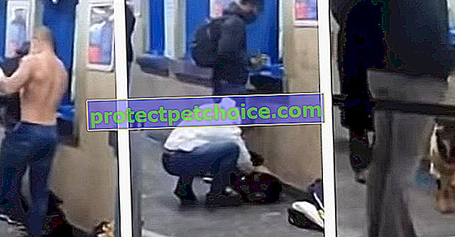 V slzách před zmrzlým toulavým psem na autobusovém nádraží se tento mladý muž rozhodl nabídnout mu teplo svých plavek! (Video)