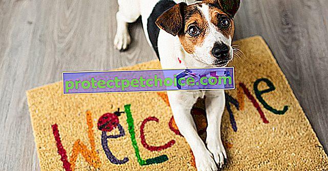 Научете кучето си да затваря врати
