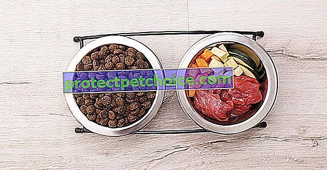 Естествена храна за кучета
