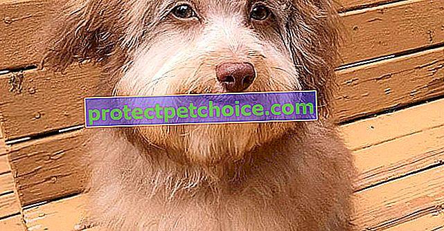 Pes se stane senzací webu s tváří s ... velmi lidskými rysy!