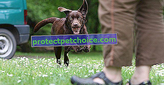 Как да предотвратите бягството на кучето си?