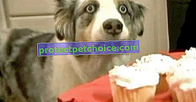 14 кучета със странно поведение