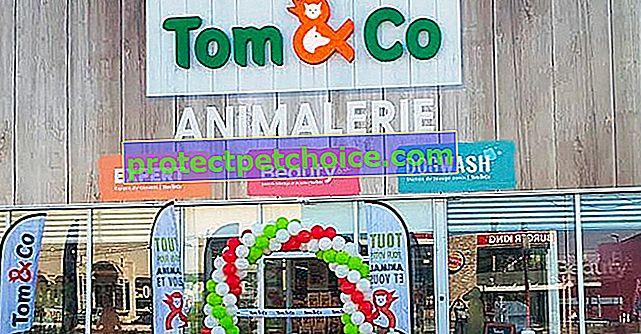 Магазинът за домашни любимци Tom & Co продължава ангажимента си към животните