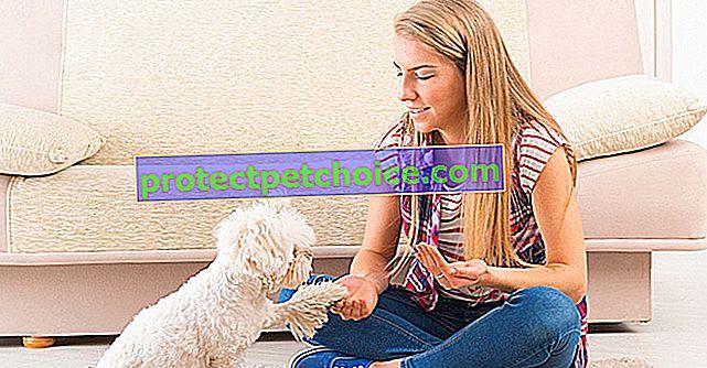 Kakšne so cene hišnih ljubljenčkov?