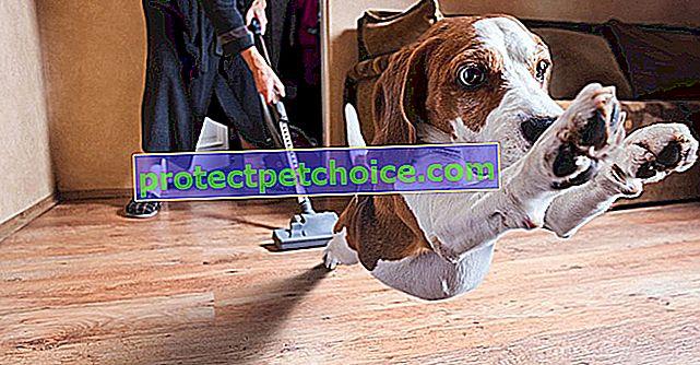 6 ідеальних пилососів для видалення шерсті собак