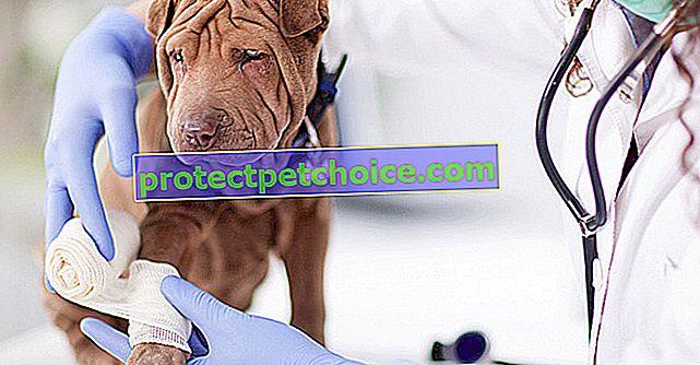 Očkování štěňat