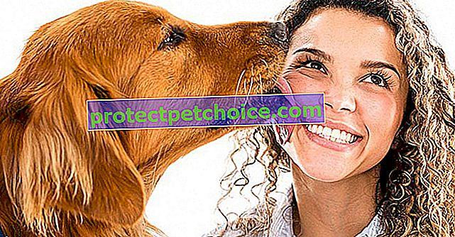 7 důvodů, proč psi olizují své majitele