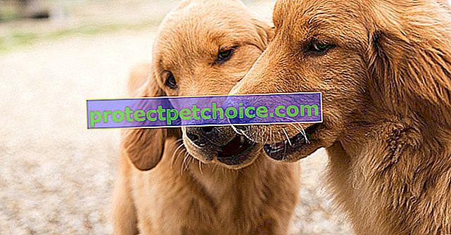 Obvladovanje ugrizov vašega psa
