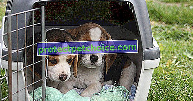 Vender un perro como individuo