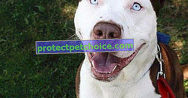 22 križa za pse koje vjerojatno niste znali