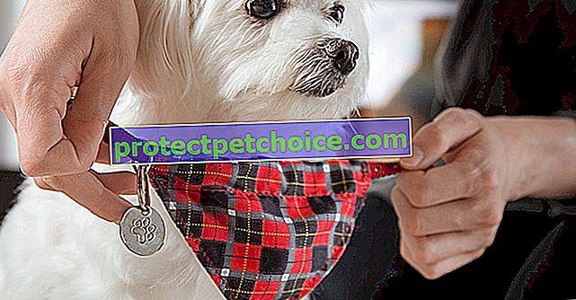 Nejlepší P jména pro psa