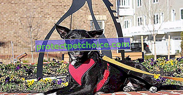 16 aktivnosti na otvorenom sa svojim psom