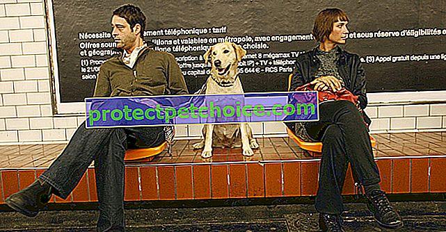 ¿Cómo viajar con tu perro en transporte público?