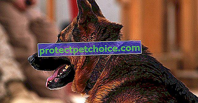Menos perros de orejas puntiagudas para mantener seguros los aeropuertos de EE. UU.