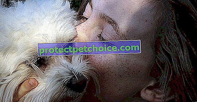 Вылизываете собаку морду, хорошо или плохо?